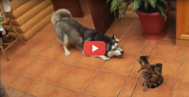 Most megtudhatja miért nincs kutya-macska barátság!