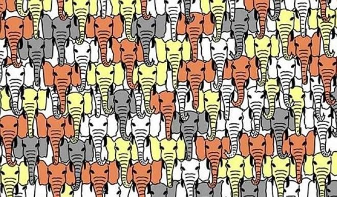 Ne legyen ideges ha nem találja meg a kutyát a sok elefánt között!