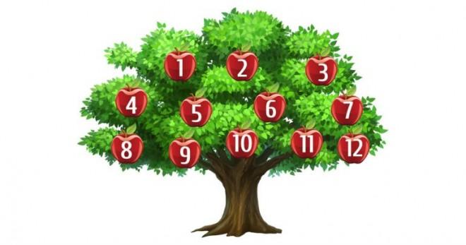 Válassz egy számot és tudd meg mit mond Neked a szeretnék fa!