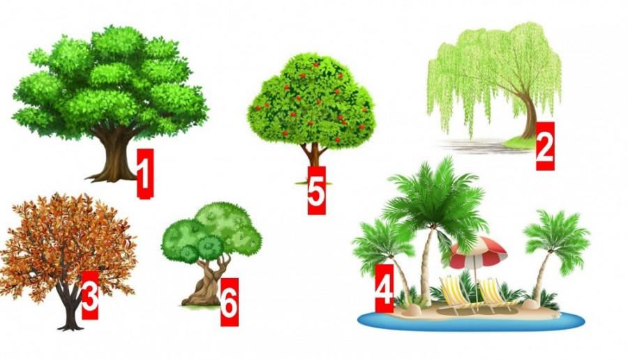 Válaszd ki a legszimpatikusabb fát és tudd meg mit árul el rólad!