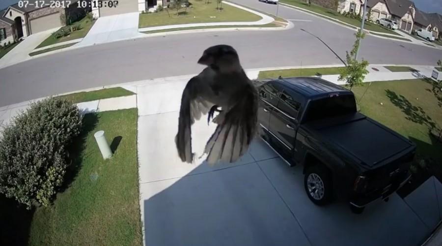 Elképesztő dolgot rögzített a biztonsági kamera! Lebegő madarat kapott  lencsevégre!