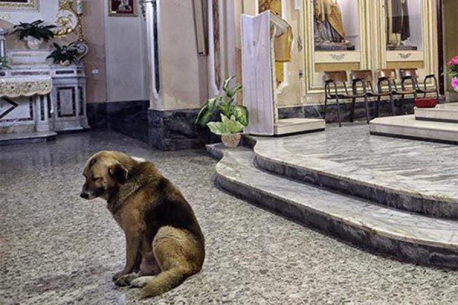 Ez a kutya minden nap elment a templomba, elsírtuk magunkat mikor megtudtuk, hogy miért!