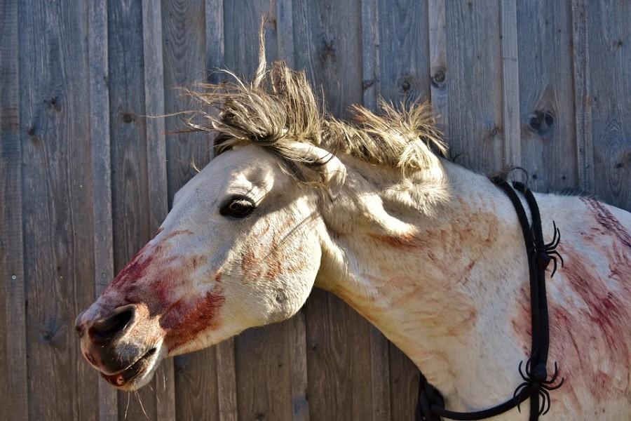 Döbbenet: Saját lova roncsolta össze a magyar színész arcát!