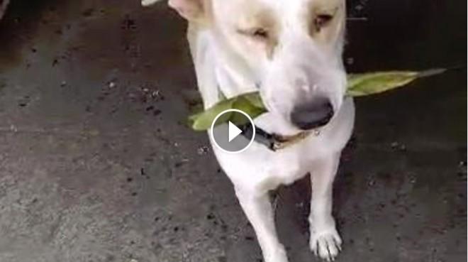 Ez a kóbor kutya minden alkalommal ajándékot visz a neki enni adónak. (VIDEO)