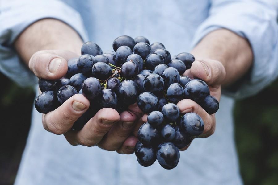 Te is kiköpöd a szőlő magját? Nagy butaságot csinálsz megmondjuk miért!