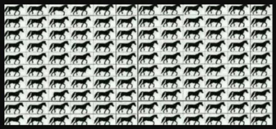 Szem teszt! Teszteld le a szemed: Hány három lábú ló van a képen?